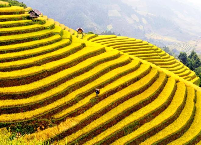 vietnam terraces